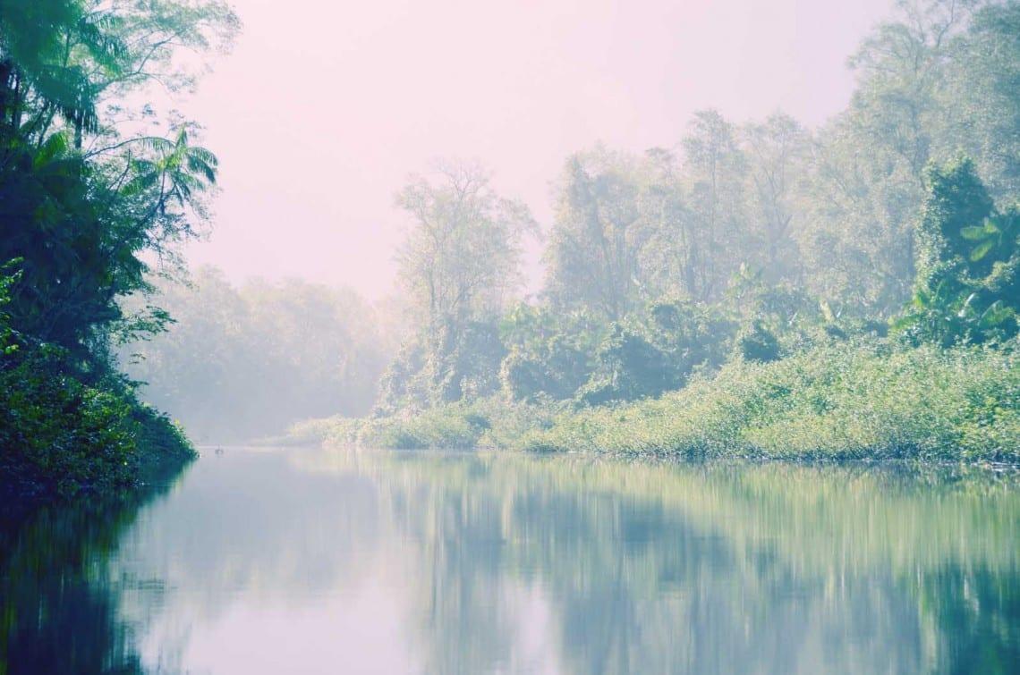 Marais de Kaw Guyane