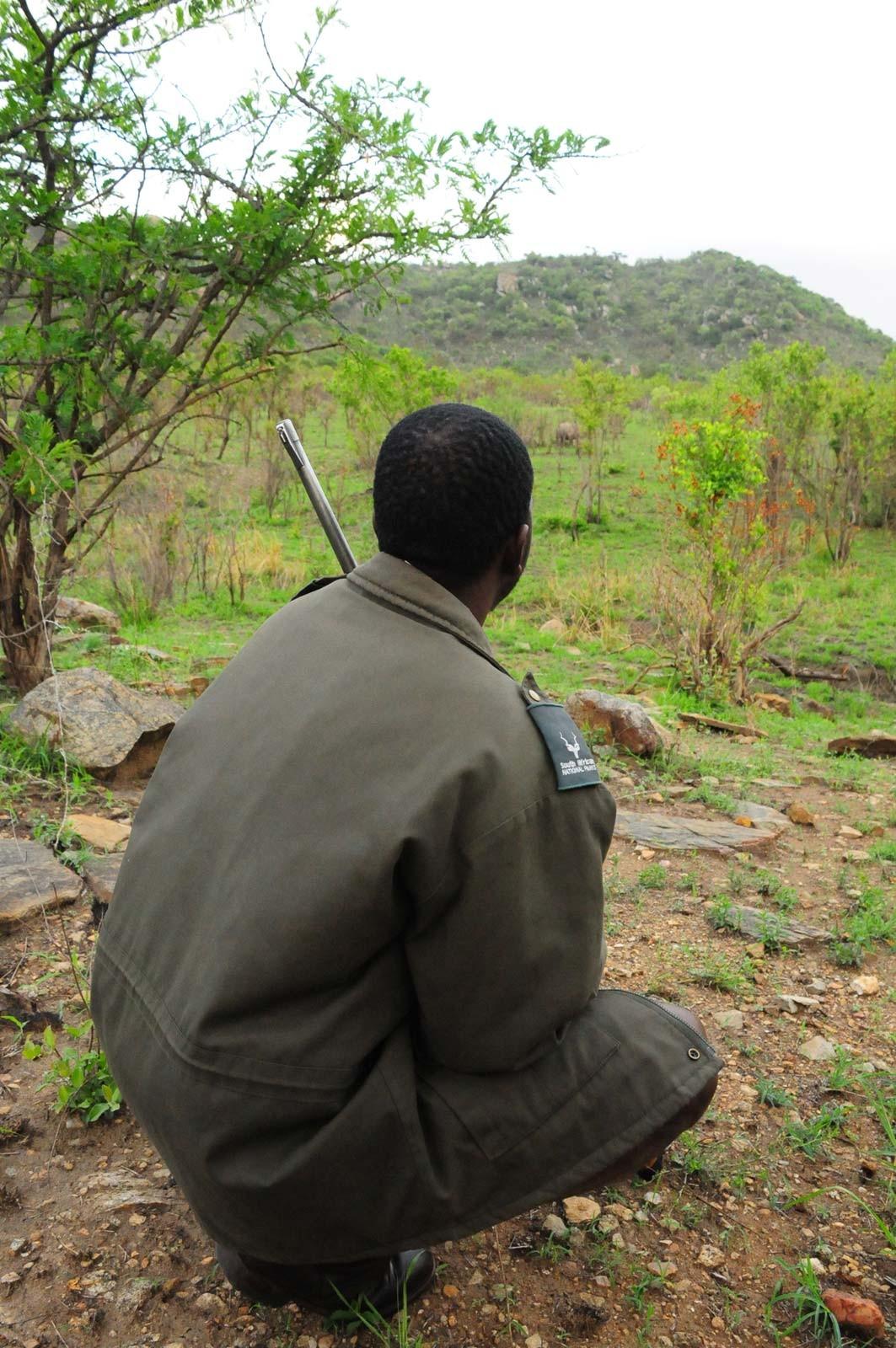 Ranger armé au Kruger Park Afrique du Sud