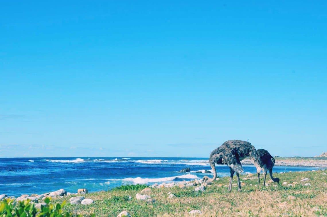 Rencontres ocean indien