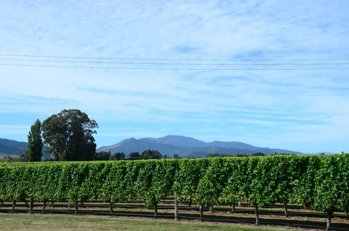 Vignes du Marlborough Nouvelle Zélande