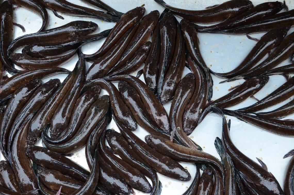 Anguilles au marché