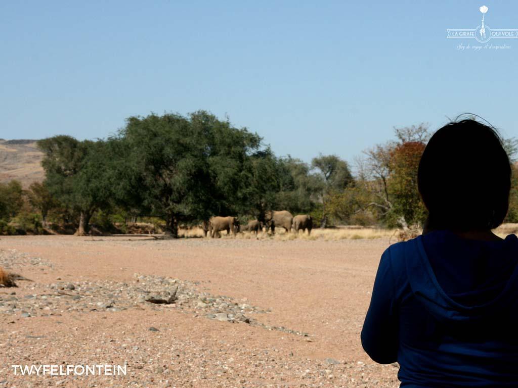 A la découverte des éléphants