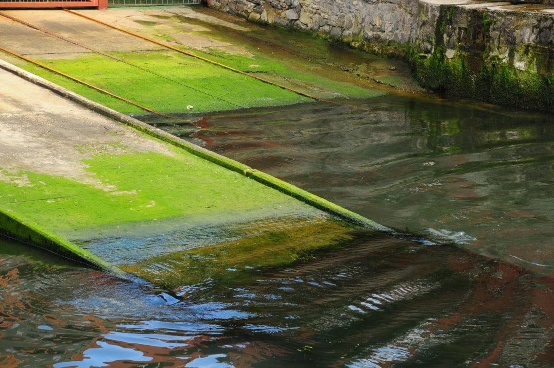 Eau et algues du port