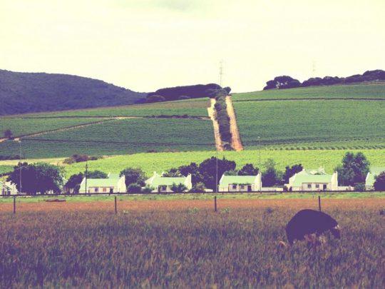 Sillonner la mythique route des vins à Stellenbosch, Afrique du Sud