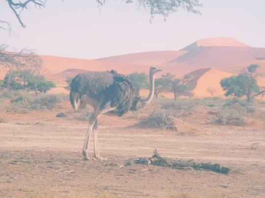 Voir le jour se lever au désert rouge de Sossusvlei, Namibie